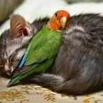 Amizade entre animais - Gato e Periquito