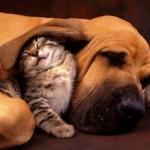 Amizade entre os animais - Cachorro e Gato