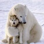 Amizade entre os animais - Urso polar e Cachorro
