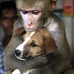 Amizade entre os animais - Macaco abraça Cão