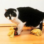 Pantufa para gato