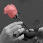 Imagens Bonitas e Românticas - As Flores Falam