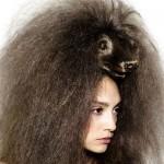 Penteados estranhos - Animal Selvagem