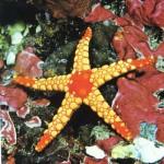 Estrela do Mar - É um metazoário que tem o esqueleto interno incrustrado de sais calcários.