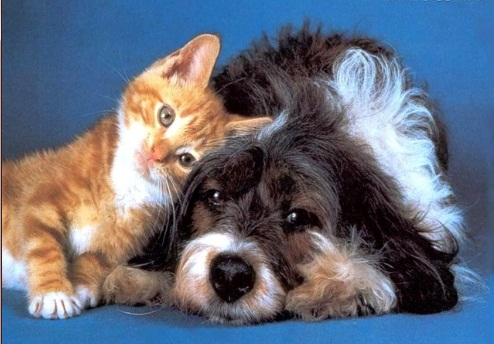 Saiba o que fazer caso seu cão ou gato se encontre com esta doença