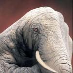 Tatuagem de elefante na mão humana. (Foto: divulgação)