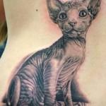 Tatuagem de gato feita nas costas. (Foto: divulgação)