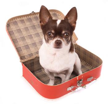 Hotéis-que-aceitam-cachorros