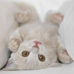 Os gatos que entraram para o Guinness Book