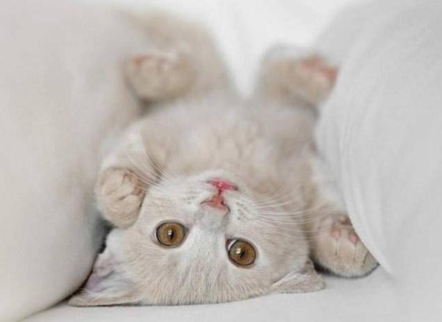 Os-gatos-que-entraram-para-o-Guinness-Book