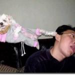 Reações animais. (Foto: divulgação)