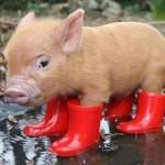 Botas para não molhar os pés. (Foto: divulgação)