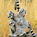Malabarismo animal. (Foto: divulgação)
