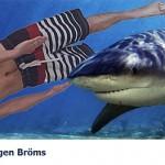 Nadando com os tubarões. (Foto: divulgação)