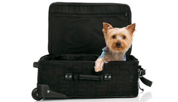 Hotéis que aceitam cachorros