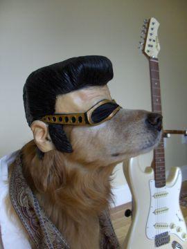 Cachorro fantasiado de Elvis. (Foto: divulgação)