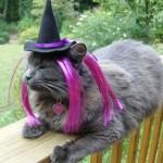 """Gato fantasiado de """"Bruxa"""". (Foto: divulgação)"""