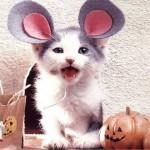 """Gato fantasiado de """"Rato"""". (Foto: divulgação)"""
