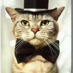 """Gato fantasiado com """"Cartola e Gravata"""". (Foto: divulgação)"""