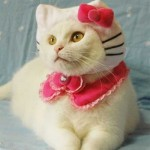 """Gato fantasiado de """"Hello Kitty"""". (Foto: divulgação)"""