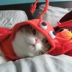 """Gato fantasiado de """"Lagosta"""". (Foto: divulgação)"""