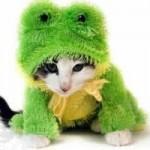 """Gato fantasiado de """"Sapo"""". (Foto: divulgação)"""