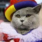 """Gato fantasiado de """"Palhaço"""". (Foto: divulgação)"""