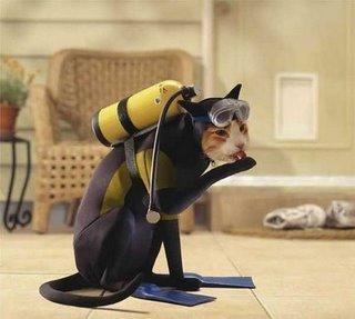 """Gato fantasiado de """"Mergulhador"""". (Foto: divulgação)"""