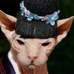"""Gato fantasiado de """"Gueixa"""". (Foto: divulgação)"""