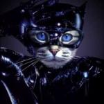 """Gato fantasiado de """"Mulher Gato"""" (Foto: divulgação)"""