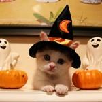 """Gato fantasiado de """"Bruxinho"""". (Foto: divulgação)"""