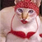 """Gato fantasiado de """"Mulher"""" (Foto: divulgação)"""