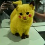 """Gatinho fantasiado de """"Pokemon"""". (Foto: divulgação)"""