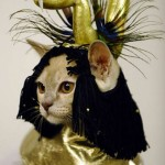 """Gato fantasiado de """"Medusa"""" (Foto: divulgação)"""