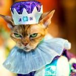 """Gato fantasiado de """"Rei"""" (Foto: divulgação)"""