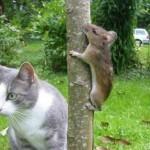 Ratinho fugindo do gato. (Foto: divulgação)