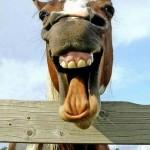 Cavalo relinchando. (Foto: divulgação)