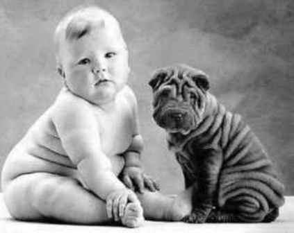 Para que possa conviver com um bebê deve-se cuidar da saúde do cãozinho e observar se está bem limpo e com as unhas cortadas. (Foto: divulgação)