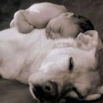 Para evitar qualquer risco é essencial adestrar seu cão para conviver com os bebês e fazê-lo reconhecer os comandos básicos como, 'senta', ´fica', 'deita', etc. (Foto: divulgação)