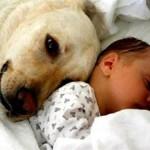 É importante fazer o cachorro se acostumar com os sons do bebê como choro, resmungos etc.. (Foto: divulgação)