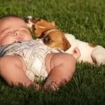 O cachorro também é frágil e necessita de cuidados diários, como comida, água, banho e muito carinho  (Foto: divulgação)