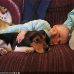 Os cães fazem bagunça, principalmente quando filhotes e escolher a raça com o perfil da família é bem bacana. (Foto: divulgação)