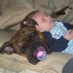 """O cachorro precisa ser adotado como novo """"membro"""" da família. (Foto: divulgação)"""