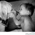 Antes de comprar um cachorro converse com o veterinário e escolha raças mais tranquilas e dóceis com crianças. (Foto: divulgação)