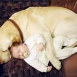 É importante que os pais imponham limites no cão para evitar que machuque o bebê. (Foto: divulgação)