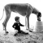 O tamanho do cachorro não importa, desde que ele seja dócil e carinhoso com bebês. (Foto: divulgação)