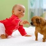 A ligação entre ambos se torna tão forte que o cachorro é incapaz de machucar o bebê. (Foto: divulgação)