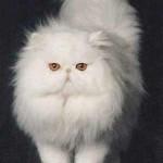 """Os gatos têm especial preferência por nomes terminados no som """"i"""". (Foto: divulgação)"""