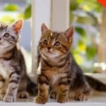 Os gatos conseguem ouvir até 65 khz (kilohertz) e os homens até 20 khz. (Foto: divulgação).