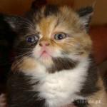 Os gatinhos gostam muito de cheiros de loções e perfumes e tentam não perder uma oportunidade para sentir tais aromas! (Foto: divulgação)